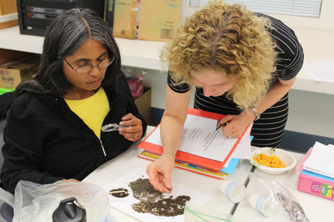 Student instructor investigates soil samples with help from course facilitator.