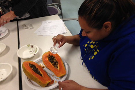 Student instructor examines the pattern of papaya seeds.